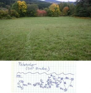Lokalita Pohorsko a distribuční mapka rostlin na této lokalitě, z nichž byly sbírány listové vzorky